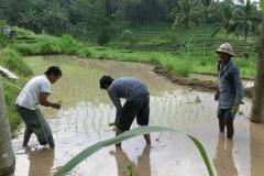 farmer-bali-1